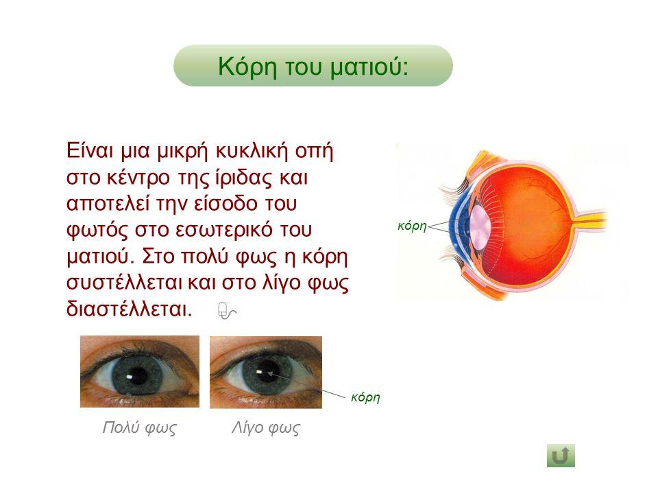 Είναι μια μικρή κυκλική οπή στο κέντρο της ίριδας και αποτελεί την είσοδο του φωτός στο εσωτερικό του ματιού.