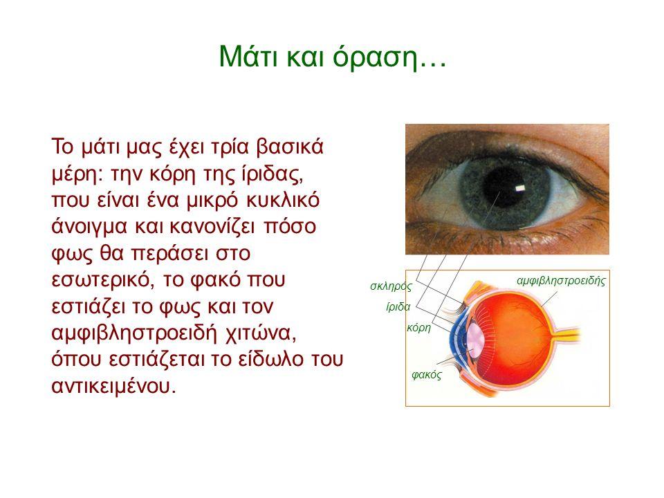 Μάτι και όραση… Το μάτι μας έχει τρία βασικά μέρη: την κόρη της ίριδας, που είναι ένα μικρό κυκλικό άνοιγμα και κανονίζει πόσο φως θα περάσει στο εσωτερικό, το φακό που εστιάζει το φως και τον αμφιβληστροειδή χιτώνα, όπου εστιάζεται το είδωλο του αντικειμένου.
