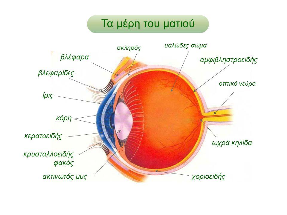 Τα μέρη του ματιού κρυσταλλοειδής φακός ακτινωτός μυς οπτικό νεύρο υαλώδες σώμα αμφιβληστροειδής κερατοειδής κόρη ίρις βλέφαρα ωχρά κηλίδα σκληρός βλε