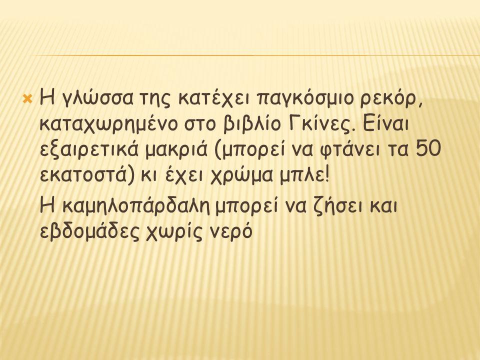  Η γλώσσα της κατέχει παγκόσμιο ρεκόρ, καταχωρημένο στο βιβλίο Γκίνες.