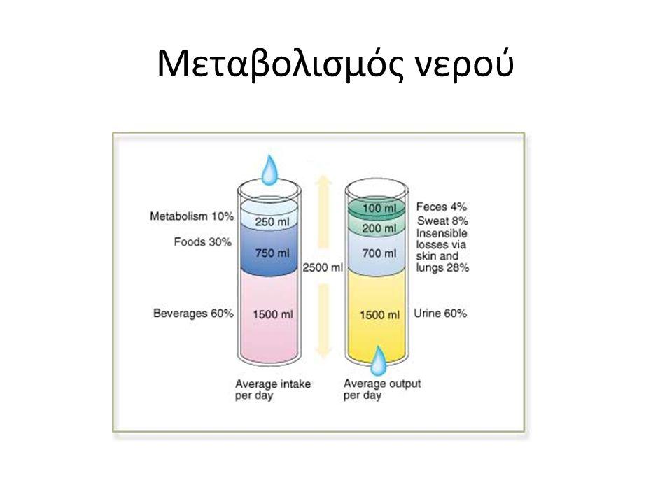 Μεταβολισμός νερού