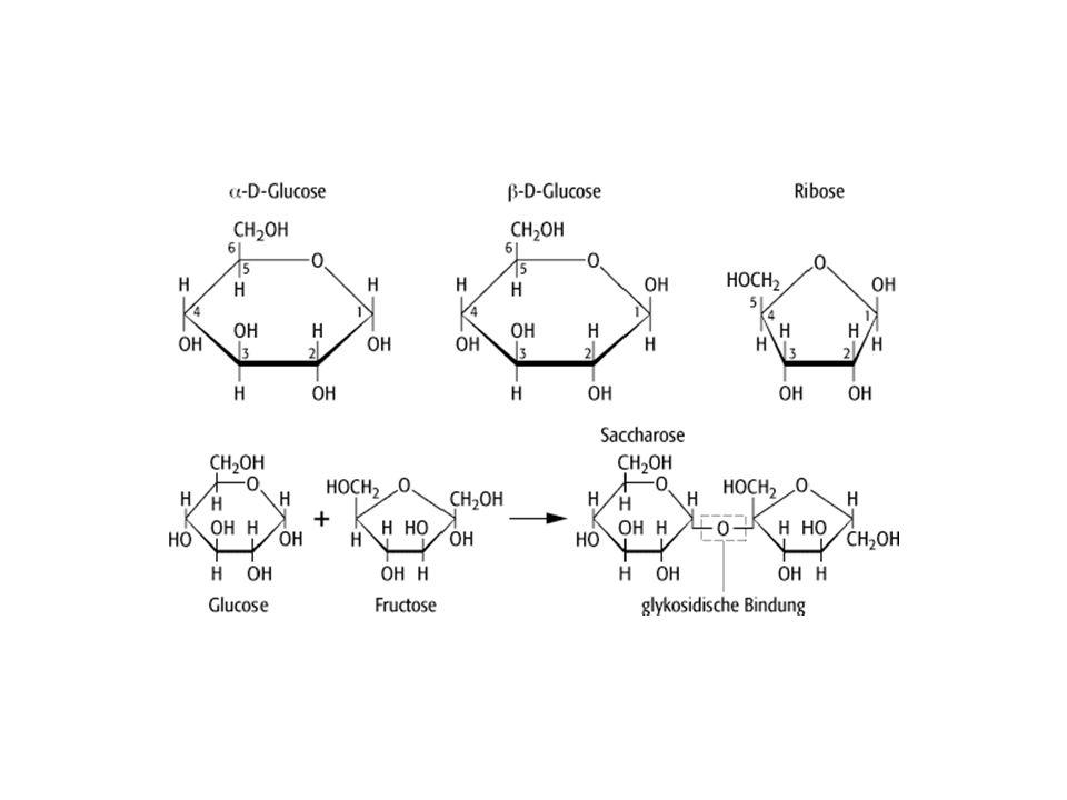 Υδατάνθρακες Απλά σάκχαρα ή μονοσακχαρίτες π.χ.