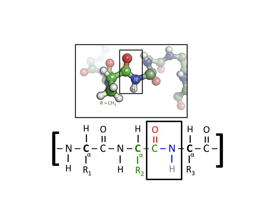 Πρωτεΐνες κύρια λειτουργία των πρωτεϊνών είναι να επανορθώνει και να δομεί τους ιστούς να συνθέτει ορμόνες, ένζυμα και άλλες ενώσεις του οργανισμού Πηγή ενέργειας.