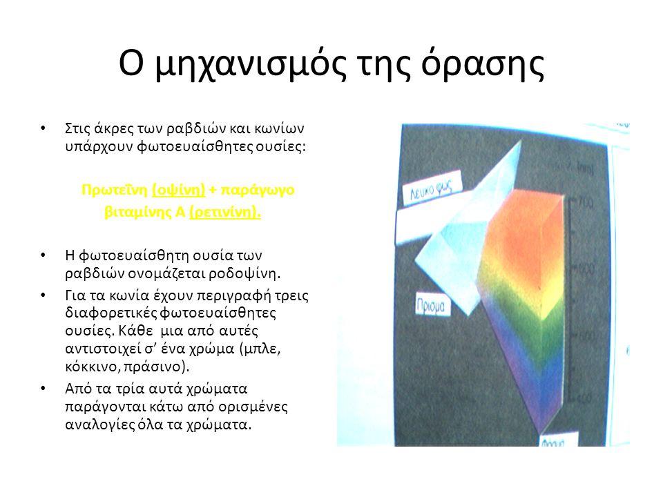 Ο μηχανισμός της όρασης Στις άκρες των ραβδιών και κωνίων υπάρχουν φωτοευαίσθητες ουσίες: Πρωτεΐνη (οψίνη) + παράγωγο βιταμίνης Α (ρετινίνη).