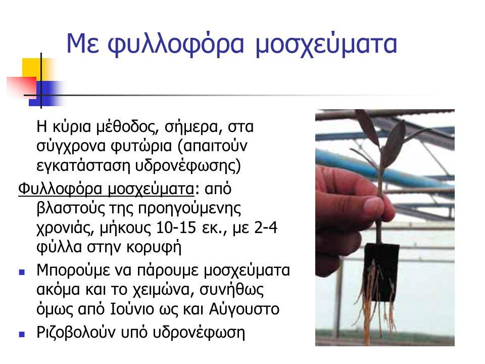 Η κύρια μέθοδος, σήμερα, στα σύγχρονα φυτώρια (απαιτούν εγκατάσταση υδρονέφωσης) Φυλλοφόρα μοσχεύματα: από βλαστούς της προηγούμενης χρονιάς, μήκους 1