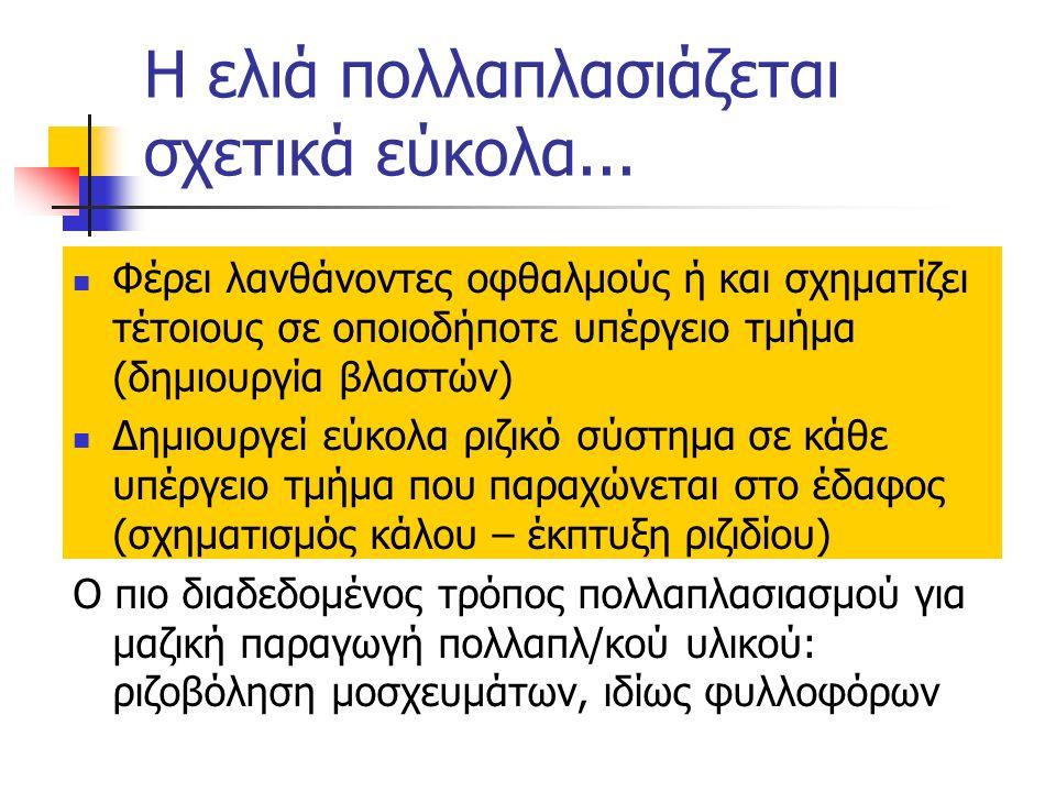 Τρόποι πολλαπλασιασμού Αγενώς  Με μοσχεύματα 1.Σκληρού ξύλου (απλά) 2.