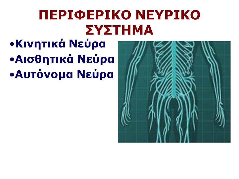 ΠΕΡΙΦΕΡΙΚΟ ΝΕΥΡΙΚΟ ΣΥΣΤΗΜΑ Κινητικά Νεύρα Αισθητικά Νεύρα Αυτόνομα Νεύρα