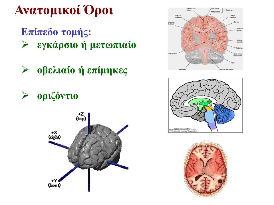 Πρόσθιος Εγκέφαλος Τελεγκέφαλος – Βασικά Γάγγλια Έλεγχος κινήσεων και ομιλίας Νόσοι Parkinson, Huntington