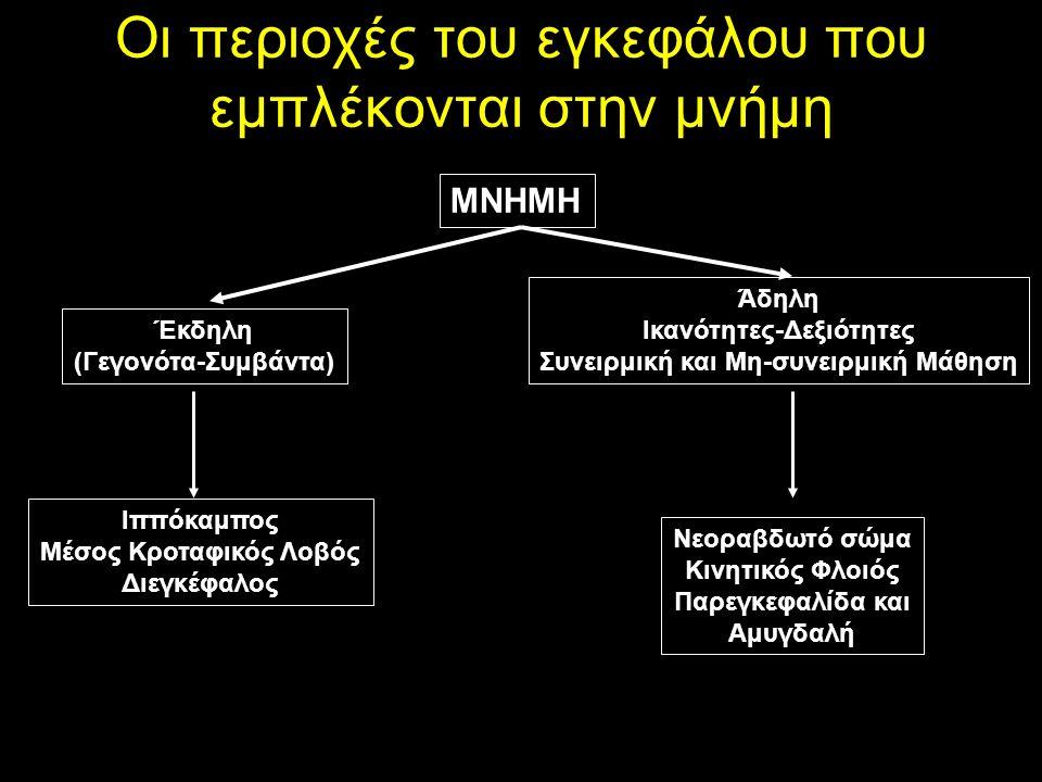 Οι περιοχές του εγκεφάλου που εμπλέκονται στην μνήμη ΜΝΗΜΗ Έκδηλη (Γεγονότα-Συμβάντα) Άδηλη Ικανότητες-Δεξιότητες Συνειρμική και Μη-συνειρμική Μάθηση Ιππόκαμπος Μέσος Κροταφικός Λοβός Διεγκέφαλος Νεοραβδωτό σώμα Κινητικός Φλοιός Παρεγκεφαλίδα και Αμυγδαλή