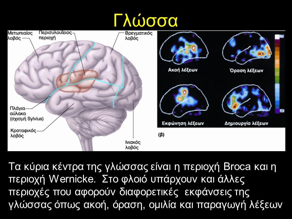 Γλώσσα Τα κύρια κέντρα της γλώσσας είναι η περιοχή Broca και η περιοχή Wernicke.