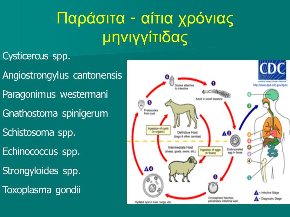 Παράσιτα - αίτια χρόνιας μηνιγγίτιδας Cysticercus spp.
