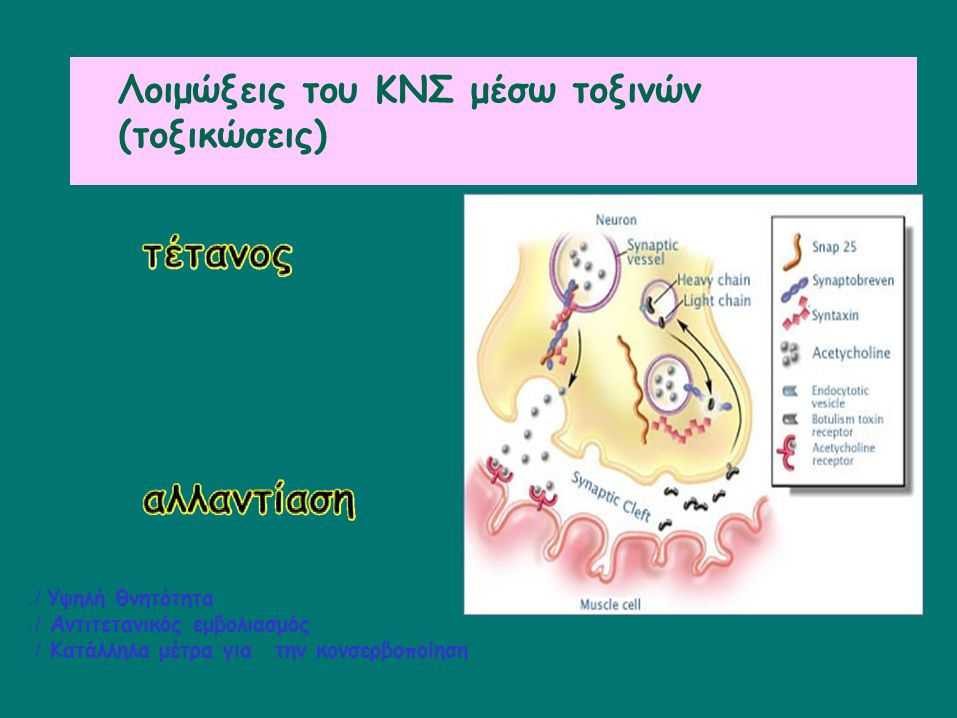 Λοιμώξεις από ερπητοϊούς Οι ερπητοϊοί μεταφέρονται στο ΚΝΣ αιματογενώς ή μέσω των νεύρων Οι ιοί HSV και VZV μολύνουν το ΚΝΣ μεταφερόμενοι μέσω των νεύρων ή μετά από αναζωπύρωση σωματιδίων ιών που βρίσκονται σε λανθάνουσα κατάσταση στα νωτιαία γάγγλια Η άσηπτη μηνιγγίτιδα είναι μια αυτοπεριοριζόμενη νόσος Η εγκεφαλίτιδα είναι βαρύτερη νόσος και συχνά παρουσιάζει νευρολογικές επιπλοκές και κώφωση