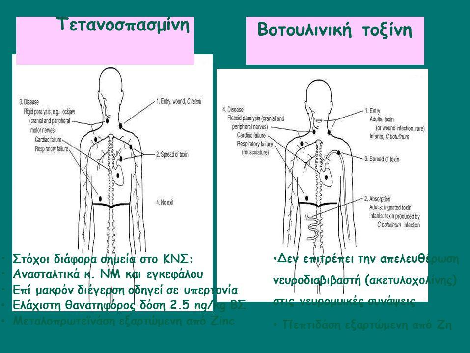 Στόχοι διάφορα σημεία στο ΚΝΣ: Ανασταλτικά κ. ΝΜ και εγκεφάλου Επί μακρόν διέγερση οδηγεί σε υπερτονία Ελάχιστη θανατηφόρος δόση 2.5 ng/kg ΒΣ Μεταλοπρ