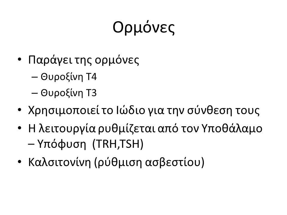 Ορμόνες Παράγει της ορμόνες – Θυροξίνη Τ4 – Θυροξίνη Τ3 Χρησιμοποιεί το Ιώδιο για την σύνθεση τους Η λειτουργία ρυθμίζεται από τον Υποθάλαμο – Υπόφυση (TRH,TSH) Καλσιτονίνη (ρύθμιση ασβεστίου)