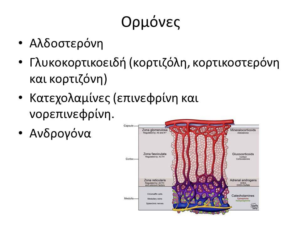 Ορμόνες Αλδοστερόνη Γλυκοκορτικοειδή (κορτιζόλη, κορτικοστερόνη και κορτιζόνη) Κατεχολαμίνες (επινεφρίνη και νορεπινεφρίνη.