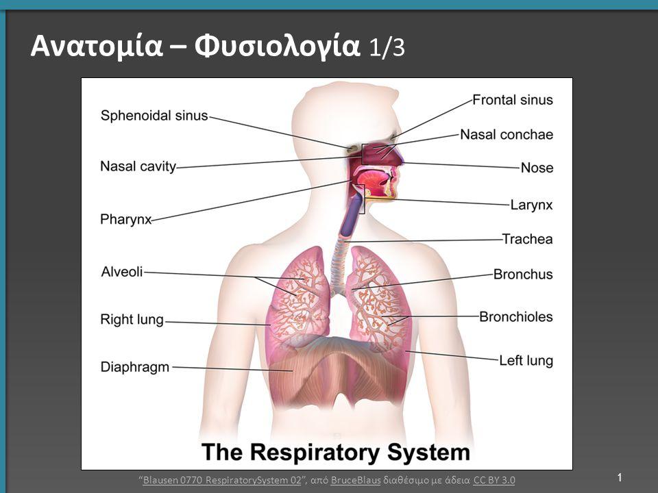 Ανατομία – Φυσιολογία 1/3 Blausen 0770 RespiratorySystem 02 , από BruceBlaus διαθέσιμο με άδεια CC BY 3.0Blausen 0770 RespiratorySystem 02BruceBlausCC BY 3.0 1