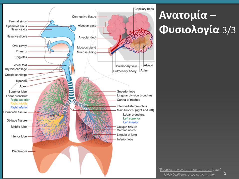 Πνευμονική Εμβολή 2/2 Θρόμβος αποφράσσει κλάδους της πνευμονικής αρτηρίας.