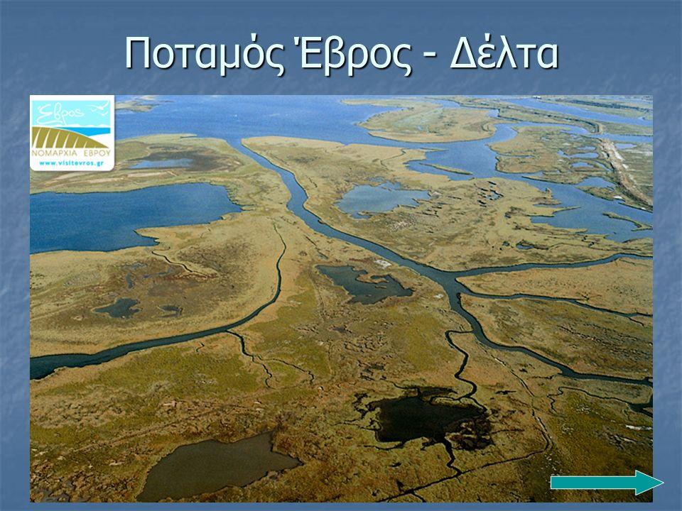 Ποταμός Έβρος - Δέλτα