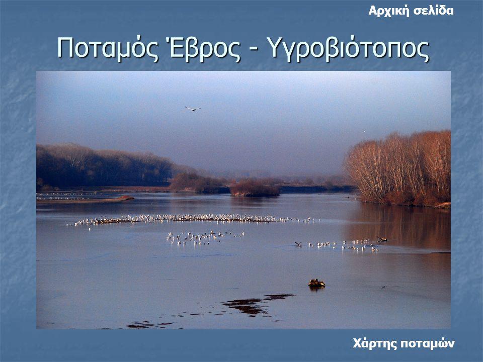 Ποταμός Έβρος - Υγροβιότοπος Χάρτης ποταμών Αρχική σελίδα
