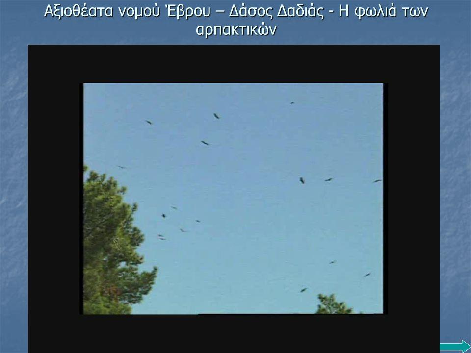 Αξιοθέατα νομού Έβρου – Δάσος Δαδιάς - Η φωλιά των αρπακτικών