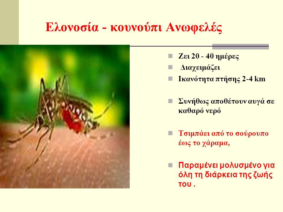 Ελονοσία - κουνούπι Aνωφελές Ζει 20 - 40 ημέρες Διαχειμάζει Iκανότητα πτήσης 2-4 km Συνήθως αποθέτουν αυγά σε καθαρό νερό Τσιμπάει από το σούρουπο έως το χάραμα, Παραμένει μολυσμένο για όλη τη διάρκεια της ζωής του.