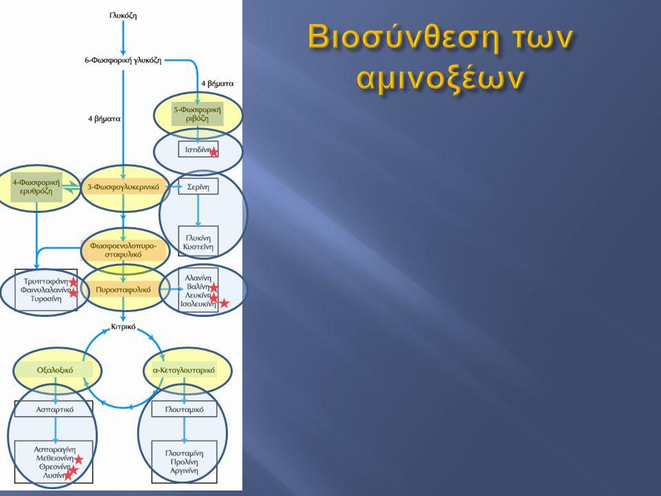 Βιοσύνθεση των αμινοξέων