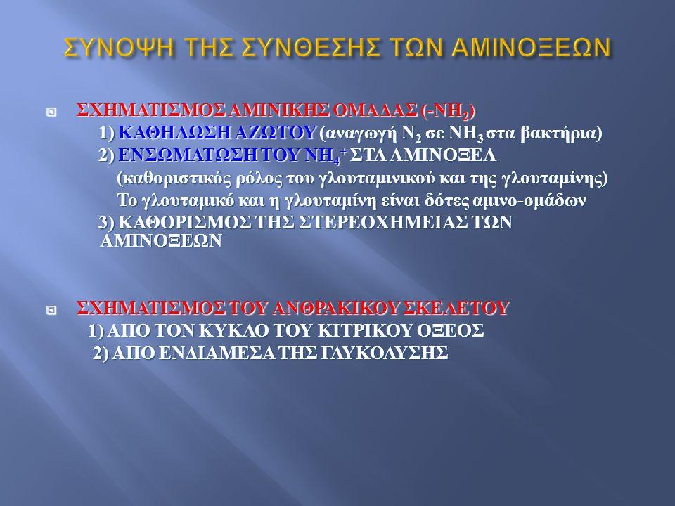 ΣΥΝΟΨΗ ΤΗΣ ΣΥΝΘΕΣΗΣ ΤΩΝ ΑΜΙΝΟΞΕΩΝ  ΣΧΗΜΑΤΙΣΜΟΣ ΑΜΙΝΙΚΗΣ ΟΜΑΔΑΣ (- ΝΗ 2 ) 1) ΚΑΘΗΛΩΣΗ ΑΖΩΤΟΥ ( αναγωγή Ν 2 σε ΝΗ 3 στα βακτήρια ) 1) ΚΑΘΗΛΩΣΗ ΑΖΩΤΟΥ ( αναγωγή Ν 2 σε ΝΗ 3 στα βακτήρια ) 2) ΕΝΣΩΜΑΤΩΣΗ ΤΟΥ ΝΗ 4 + ΣΤΑ ΑΜΙΝΟΞΕΑ 2) ΕΝΣΩΜΑΤΩΣΗ ΤΟΥ ΝΗ 4 + ΣΤΑ ΑΜΙΝΟΞΕΑ ( καθοριστικός ρόλος του γλουταμινικού και της γλουταμίνης ) ( καθοριστικός ρόλος του γλουταμινικού και της γλουταμίνης ) Το γλουταμικό και η γλουταμίνη είναι δότες αμινο - ομάδων Το γλουταμικό και η γλουταμίνη είναι δότες αμινο - ομάδων 3) ΚΑΘΟΡΙΣΜΟΣ ΤΗΣ ΣΤΕΡΕΟΧΗΜΕΙΑΣ ΤΩΝ ΑΜΙΝΟΞΕΩΝ 3) ΚΑΘΟΡΙΣΜΟΣ ΤΗΣ ΣΤΕΡΕΟΧΗΜΕΙΑΣ ΤΩΝ ΑΜΙΝΟΞΕΩΝ  ΣΧΗΜΑΤΙΣΜΟΣ ΤΟΥ ΑΝΘΡΑΚΙΚΟΥ ΣΚΕΛΕΤΟΥ 1) ΑΠΟ ΤΟΝ ΚΥΚΛΟ ΤΟΥ ΚΙΤΡΙΚΟΥ ΟΞΕΟΣ 1) ΑΠΟ ΤΟΝ ΚΥΚΛΟ ΤΟΥ ΚΙΤΡΙΚΟΥ ΟΞΕΟΣ 2) ΑΠΟ ΕΝΔΙΑΜΕΣΑ ΤΗΣ ΓΛΥΚΟΛΥΣΗΣ 2) ΑΠΟ ΕΝΔΙΑΜΕΣΑ ΤΗΣ ΓΛΥΚΟΛΥΣΗΣ