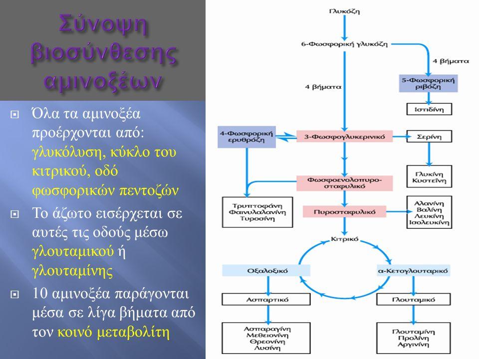  Όλα τα αμινοξέα προέρχονται από : γλυκόλυση, κύκλο του κιτρικού, οδό φωσφορικών πεντοζών  Το άζωτο εισέρχεται σε αυτές τις οδούς μέσω γλουταμικού ή γλουταμίνης  10 αμινοξέα παράγονται μέσα σε λίγα βήματα από τον κοινό μεταβολίτη