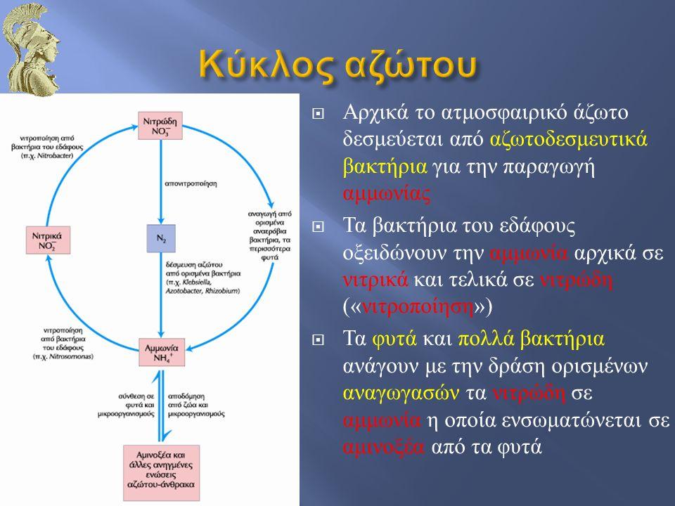 11  Δέσμευση 22  Παραγωγή αμμωνίας (ΝΗ 4 + ) 33  Οξείδωση  αμμωνίας σε  Νιτρώδη  (νιτροποίηση) 44  Αμμωνία  ενσωματώνεται  σε αμινοξέα  των φυτών  Χρησιμοποίηση  φυτών από τα  ζώα ως πηγή  αμινοξέων 55  Όταν  πεθαίνουν  οργανισμοί, τα  μικρόβια διασπούν  τις πρωτείνες,  η αμμωνία  επιστρέφει στο  έδαφος 66  Τα νιτροποιητικά  βακτήρια τη μετατρέπουν  σε νιτρικά και νιτρώδη