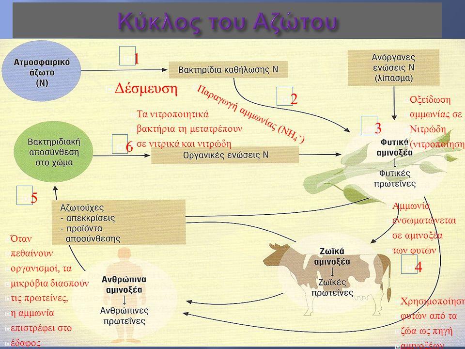  Το πρώτο προϊόν της δέσμευσης του αζώτου είναι η αμμωνία  Η αμμωνία μπορεί να χρησιμοποιηθεί από όλους τους οργανισμούς είτε άμεσα είτε αφού προηγουμένως μετατραπεί σε άλλες διαλυτές ενώσεις όπως νιτρικά, νιτρώδη ή αμινοξέα
