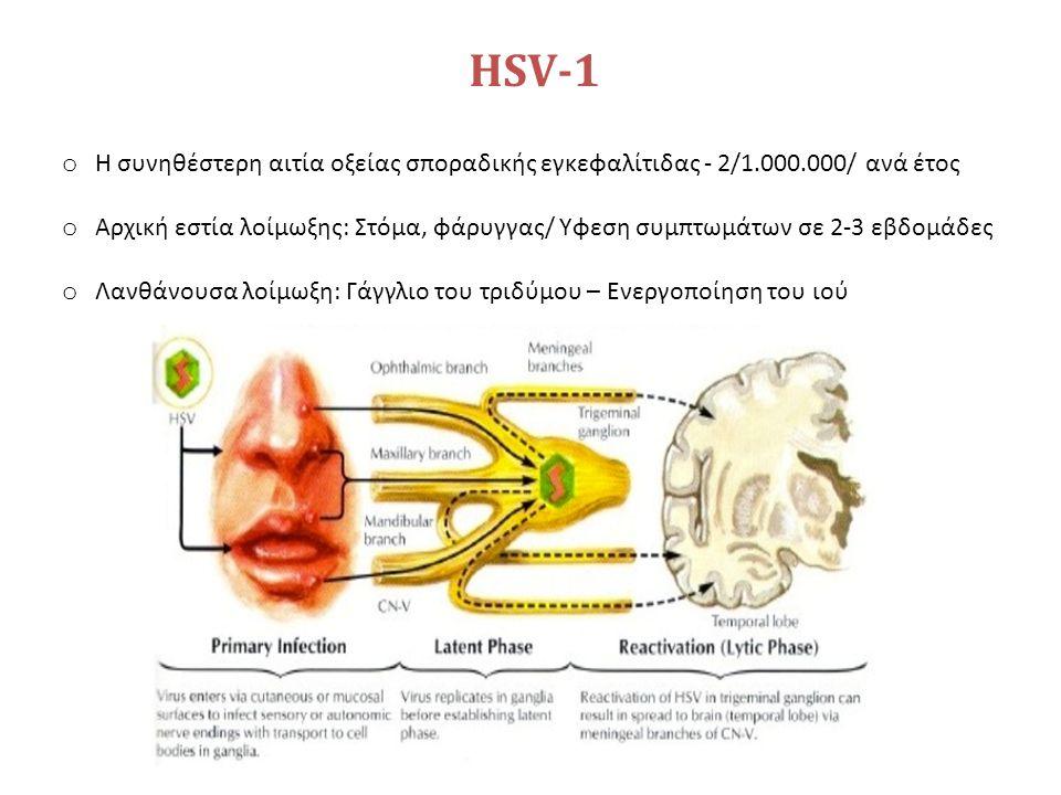 HSV-1 o Η συνηθέστερη αιτία οξείας σποραδικής εγκεφαλίτιδας - 2/1.000.000/ ανά έτος o Αρχική εστία λοίμωξης: Στόμα, φάρυγγας/ Υφεση συμπτωμάτων σε 2-3 εβδομάδες o Λανθάνουσα λοίμωξη: Γάγγλιο του τριδύμου – Ενεργοποίηση του ιού