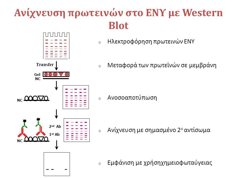 Ανίχνευση πρωτεινών στο ΕΝΥ με Western Blot Transfer NC Gel NC 1 st Ab 2 nd Ab NC o Ηλεκτροφόρηση πρωτεινών ΕΝΥ o Μεταφορά των πρωτεϊνών σε μεμβράνη o Ανοσοαποτύπωση o Ανίχνευση με σημασμένο 2 ο αντίσωμα o Εμφάνιση με χρήσηχημειοφωταύγειας