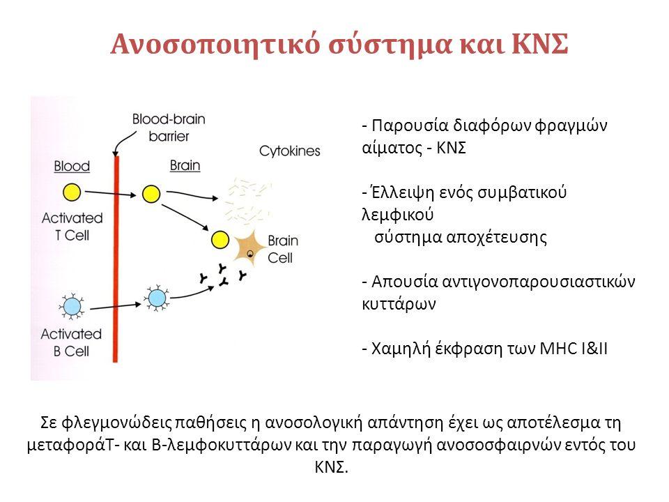 Ανοσοποιητικό σύστημα και ΚΝΣ - Παρουσία διαφόρων φραγμών αίματος - ΚΝΣ - Έλλειψη ενός συμβατικού λεμφικού σύστημα αποχέτευσης - Απουσία αντιγονοπαρουσιαστικών κυττάρων - Χαμηλή έκφραση των MHC I&II Σε φλεγμονώδεις παθήσεις η ανοσολογική απάντηση έχει ως αποτέλεσμα τη μεταφοράΤ- και Β-λεμφοκυττάρων και την παραγωγή ανοσοσφαιρνών εντός του ΚΝΣ.