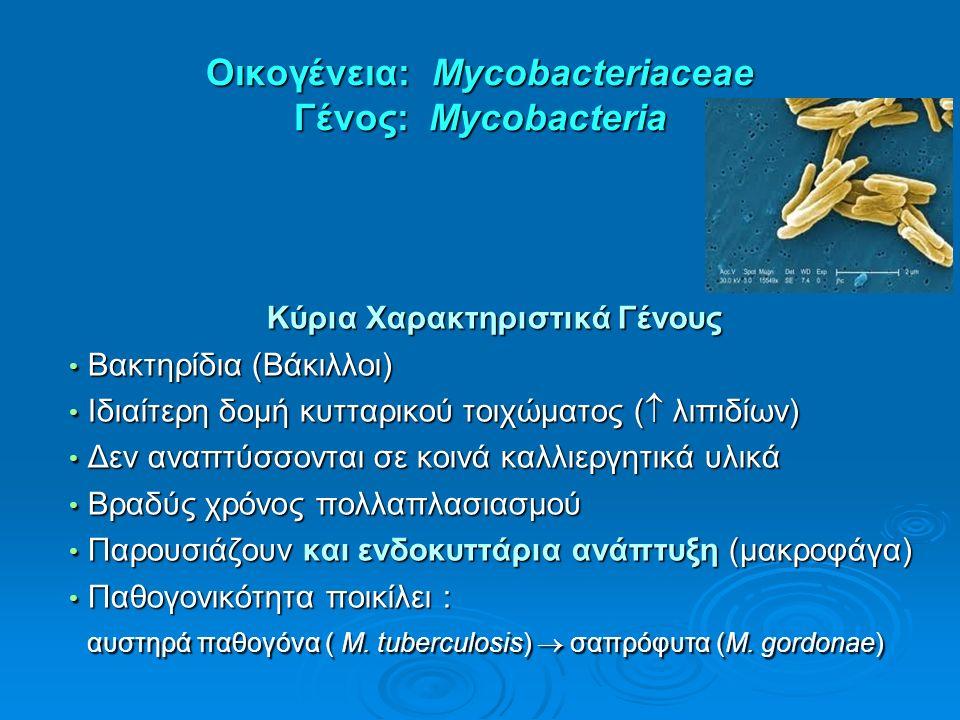Οικογένεια: Mycobacteriaceae Γένος: Mycobacteria Κύρια Χαρακτηριστικά Γένους Βακτηρίδια (Βάκιλλοι) Βακτηρίδια (Βάκιλλοι) Ιδιαίτερη δομή κυτταρικού τοι