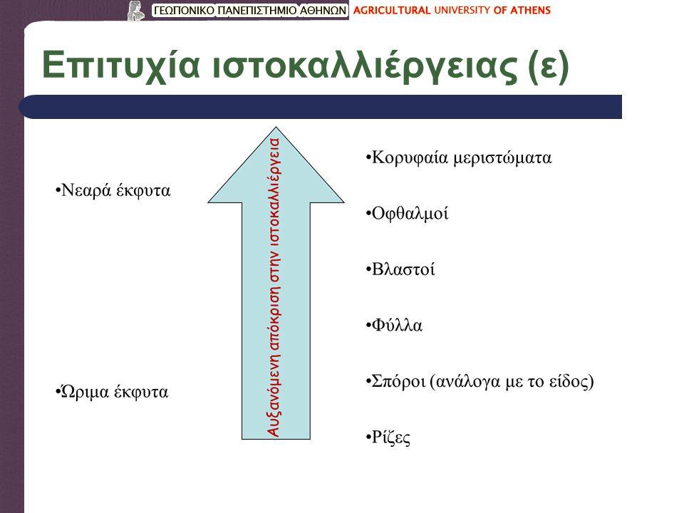 Επιτυχία ιστοκαλλιέργειας (ε)