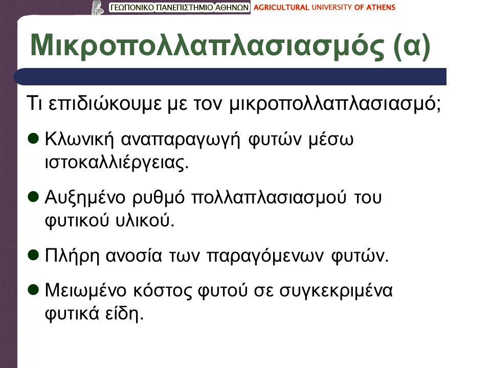 Μικροπολλαπλασιασμός (β)