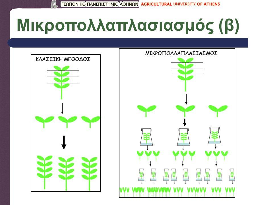 Στάδια μικροπολλαπλασιασμού 0.Προετοιμασία μητρικού φυτού.