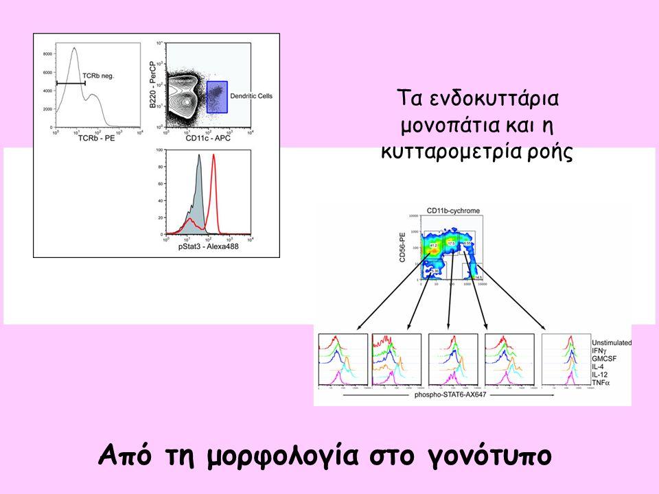 Τα ενδοκυττάρια μονοπάτια και η κυτταρομετρία ροής Από τη μορφολογία στο γονότυπο