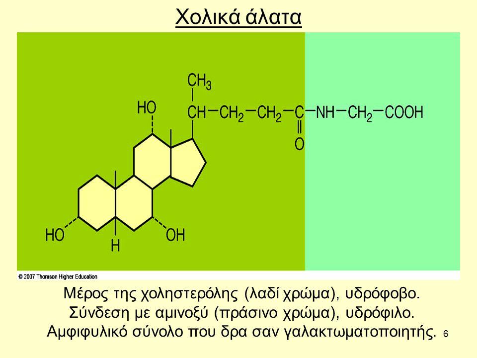 6 Χολικά άλατα Μέρος της χοληστερόλης (λαδί χρώμα), υδρόφοβο.