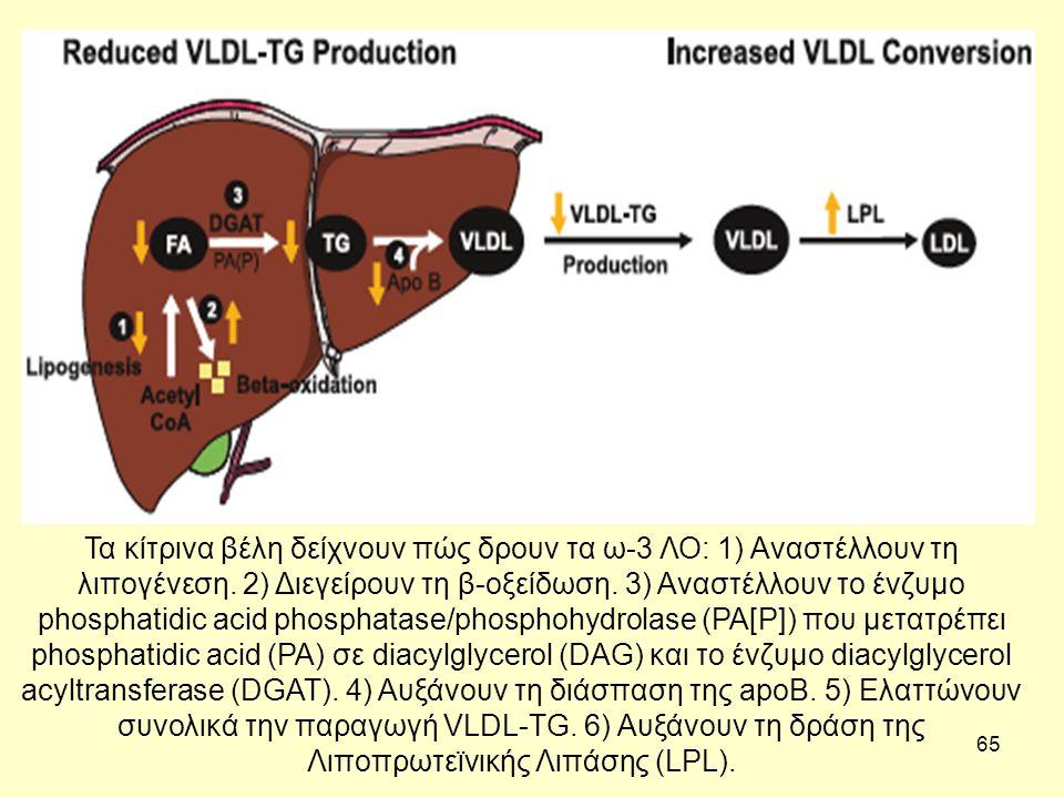 65 Τα κίτρινα βέλη δείχνουν πώς δρουν τα ω-3 ΛΟ: 1) Αναστέλλουν τη λιπογένεση.