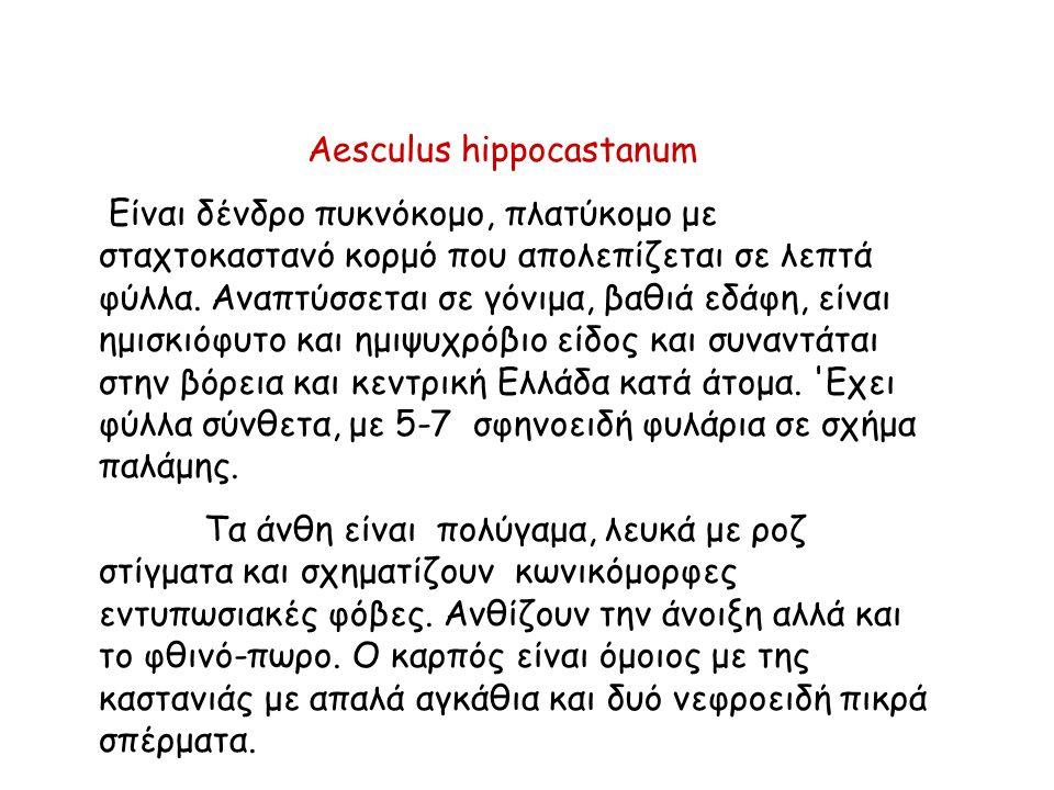 Aesculus hippocastanum Είναι δένδρο πυκνόκομο, πλατύκομο με σταχτοκαστανό κορμό που απολεπίζεται σε λεπτά φύλλα.