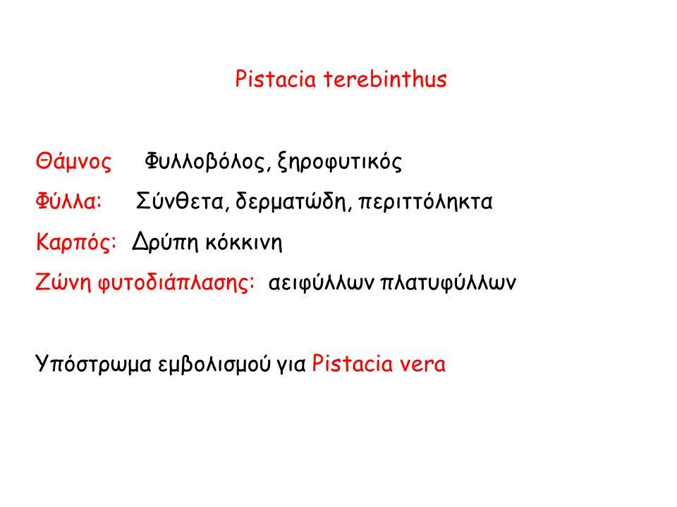 Pistacia terebinthus Θάμνος Φυλλοβόλος, ξηροφυτικός Φύλλα: Σύνθετα, δερματώδη, περιττόληκτα Καρπός: Δρύπη κόκκινη Ζώνη φυτοδιάπλασης: αειφύλλων πλατυφύλλων Υπόστρωμα εμβολισμού για Pistacia vera