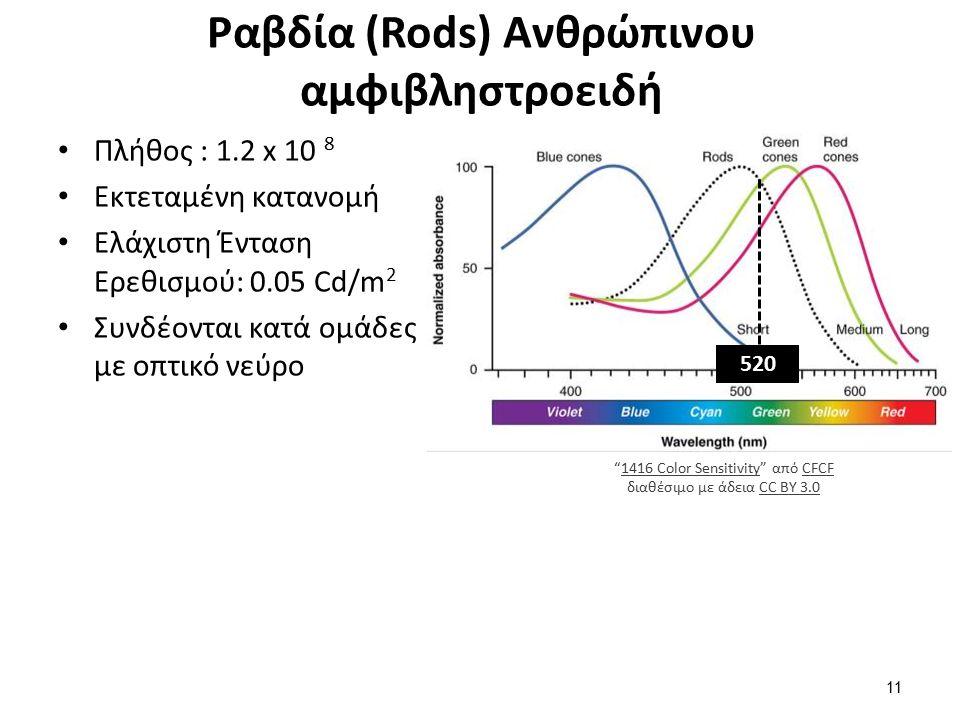 Ραβδία (Rods) Ανθρώπινου αμφιβληστροειδή Πλήθος : 1.2 x 10 8 Εκτεταμένη κατανομή Ελάχιστη Ένταση Ερεθισμού: 0.05 Cd/m 2 Συνδέονται κατά ομάδες με οπτικό νεύρο 520 1416 Color Sensitivity από CFCF διαθέσιμο με άδεια CC BY 3.01416 Color SensitivityCFCFCC BY 3.0 11