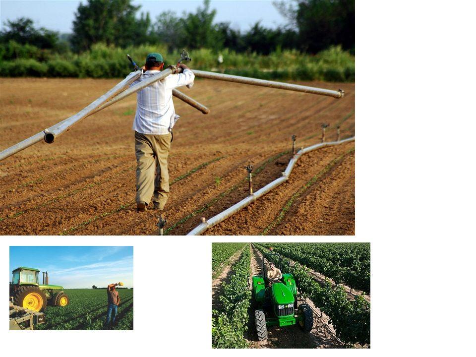 Η μεγάλη υποκατάσταση μεταξύ των αγροτικών προϊόντων Υπάρχει μεγάλη υποκατάσταση στην ανθρώπινη κατανάλωση μεταξύ των διαφόρων αγροτικών προϊόντων και ιδιαίτερα μεταξύ προϊόντων της ίδιας ομάδας, όπως π.χ.