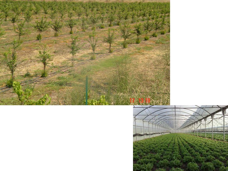 Με τον όρο διάθεση των προϊόντων ο παραγωγός εννοεί: Την εξασφάλιση βέβαιης διάθεσης των προϊόντων τους Αυτό σημαίνει ότι οι γεωργοί θέλουν πρώτα από όλα να είναι βέβαιοι ότι θα πωλήσουν οπωσδήποτε τα προϊόντα που παράγουν και επομένως θα αποκτήσουν εισοδήματα από την απασχόλησή τους στη γεωργία.