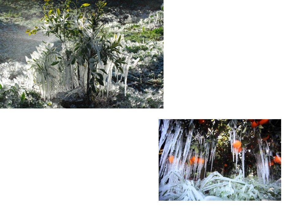 Το φυσικό περιβάλλον Στο φυσικό περιβάλλον περιλαμβάνονται μεταξύ άλλων τα εξής: το έδαφος και πιο συγκεκριμένα η καλλιεργήσιμη έκταση.