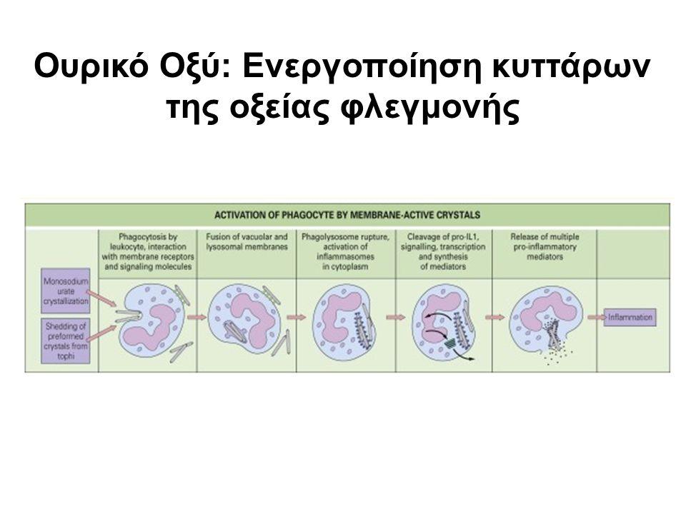 Ουρικό Οξύ: Ενεργοποίηση κυττάρων της οξείας φλεγμονής