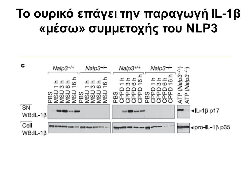 Το ουρικό επάγει την παραγωγή IL-1β «μέσω» συμμετοχής του NLP3