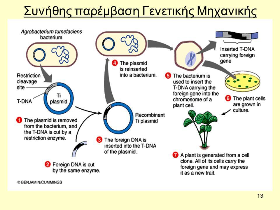 13 Συνήθης παρέμβαση Γενετικής Μηχανικής