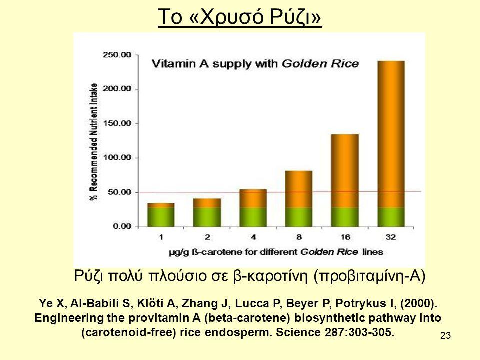 23 Το «Χρυσό Ρύζι» Ρύζι πολύ πλούσιο σε β-καροτίνη (προβιταμίνη-Α) Ye X, Al-Babili S, Klöti A, Zhang J, Lucca P, Beyer P, Potrykus I, (2000).